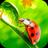 icon Ladybug Video Wallpaper HD 8.0