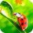 icon Ladybug Video Wallpaper HD 7.0