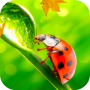 icon Ladybug Video Wallpaper HD
